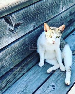 おすわり猫の写真・画像素材[2615392]