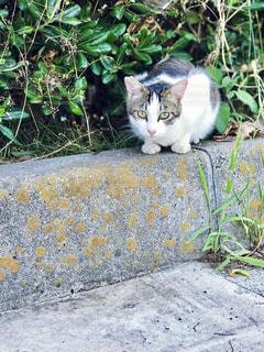 大阪の猫の写真・画像素材[2616648]