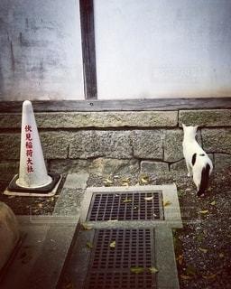 伏見稲荷の猫の写真・画像素材[2624752]