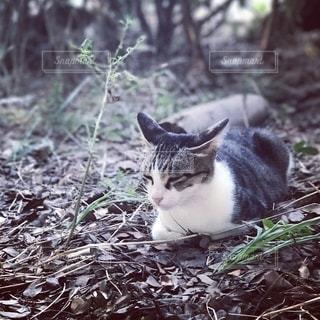 眠り猫の写真・画像素材[2624806]