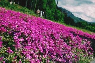 花の写真・画像素材[14866]