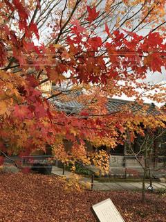 秋の写真・画像素材[2625000]