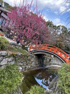 初春の下鴨神社の写真・画像素材[3020588]