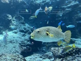 魚の写真・画像素材[2617768]