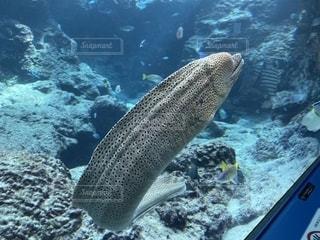 魚の写真・画像素材[2617770]