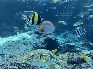魚の写真・画像素材[2617772]