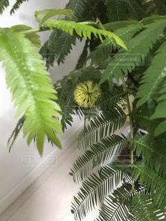 植物のクローズアップの写真・画像素材[2775318]