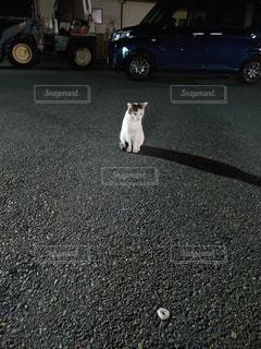 野良猫の写真・画像素材[2628272]