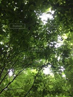 森林の写真・画像素材[101346]
