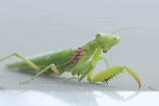 テーブルの上の昆虫の写真・画像素材[3674152]
