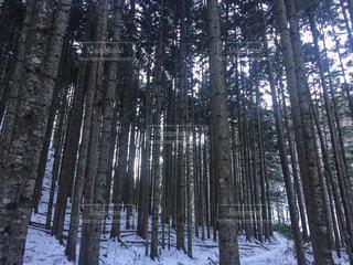 札幌岳の写真・画像素材[2723872]