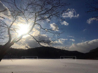 西岡公園の写真・画像素材[2785315]