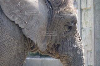 動物 - No.101533