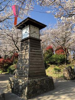 飛鳥山公園にて花見の写真・画像素材[2640833]