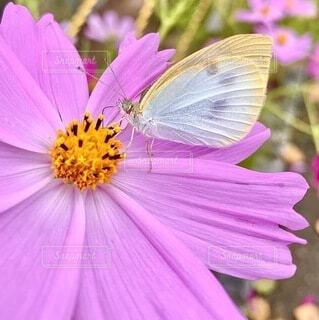 花のクローズアップの写真・画像素材[3772245]