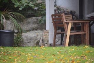 猫の写真・画像素材[136241]