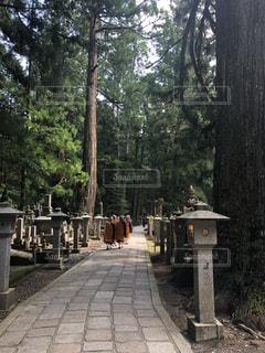 高野山 奥の院の写真・画像素材[2622763]