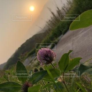 花の写真・画像素材[2625405]
