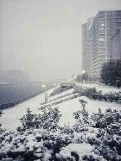 都心の積雪の写真・画像素材[2781821]