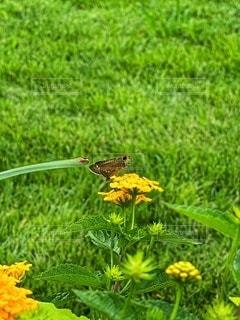 花と蝶の写真・画像素材[3433057]