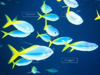 fishの写真・画像素材[3390169]