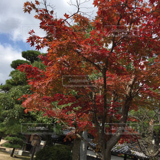 風景 - No.250082