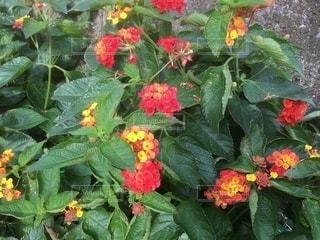 花の写真・画像素材[2633551]