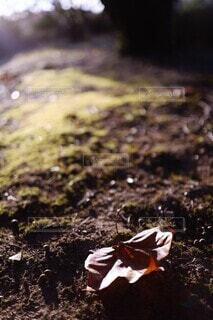 落ち葉と木の実(楓・団栗)の写真・画像素材[3845297]