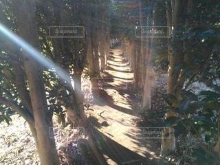 光が差し込む木のトンネルの写真・画像素材[2632363]