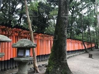 伏見稲荷の千本鳥居の写真・画像素材[2632235]