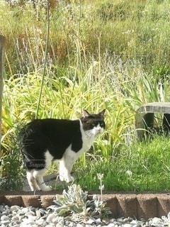 猫の写真・画像素材[2632889]