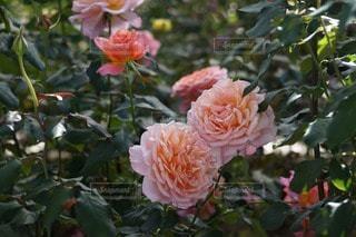 花の写真・画像素材[112024]