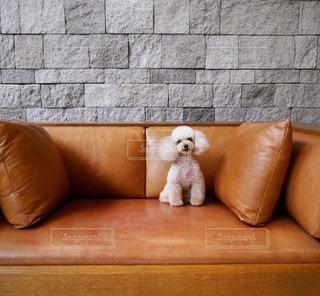 犬の写真・画像素材[23030]