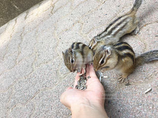 動物の写真・画像素材[2633656]