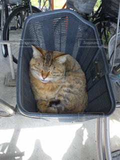 カゴ猫の写真・画像素材[2634570]