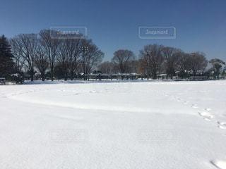 雪原の写真・画像素材[2636727]