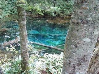 神の子池の写真・画像素材[2635421]