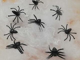 蜘蛛の群れの写真・画像素材[2684149]
