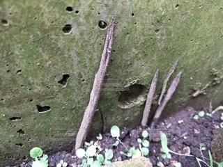 地蜘蛛のクローズアップの写真・画像素材[3362044]
