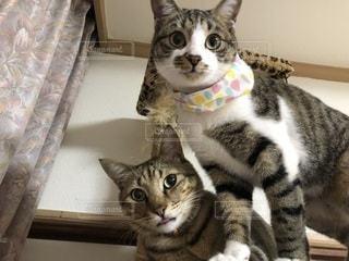 猫 かわいい 画像の写真・画像素材[2635196]