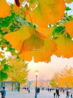 花のクローズアップの写真・画像素材[3925377]