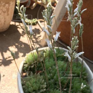 花の写真・画像素材[543748]