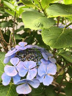 紫の写真・画像素材[580406]