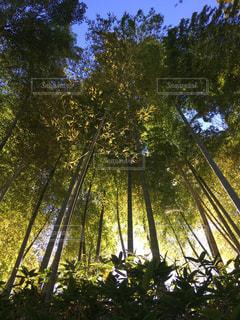 竹林の中での写真・画像素材[2729857]