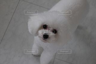犬のおねだりの写真・画像素材[2648389]