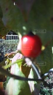 植物のクローズアップの写真・画像素材[3025434]