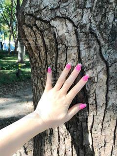 樹木を触る手はピンクのネイルの写真・画像素材[2697837]