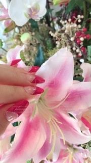 花をクローズアップの写真・画像素材[2703801]