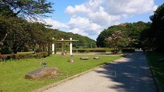 公園の写真・画像素材[110437]