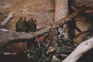 鳥の写真・画像素材[2667250]